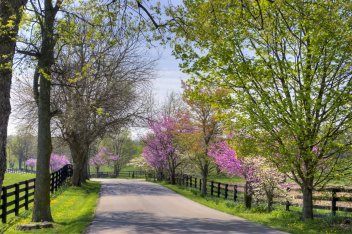 a road lined with purple flowering trees