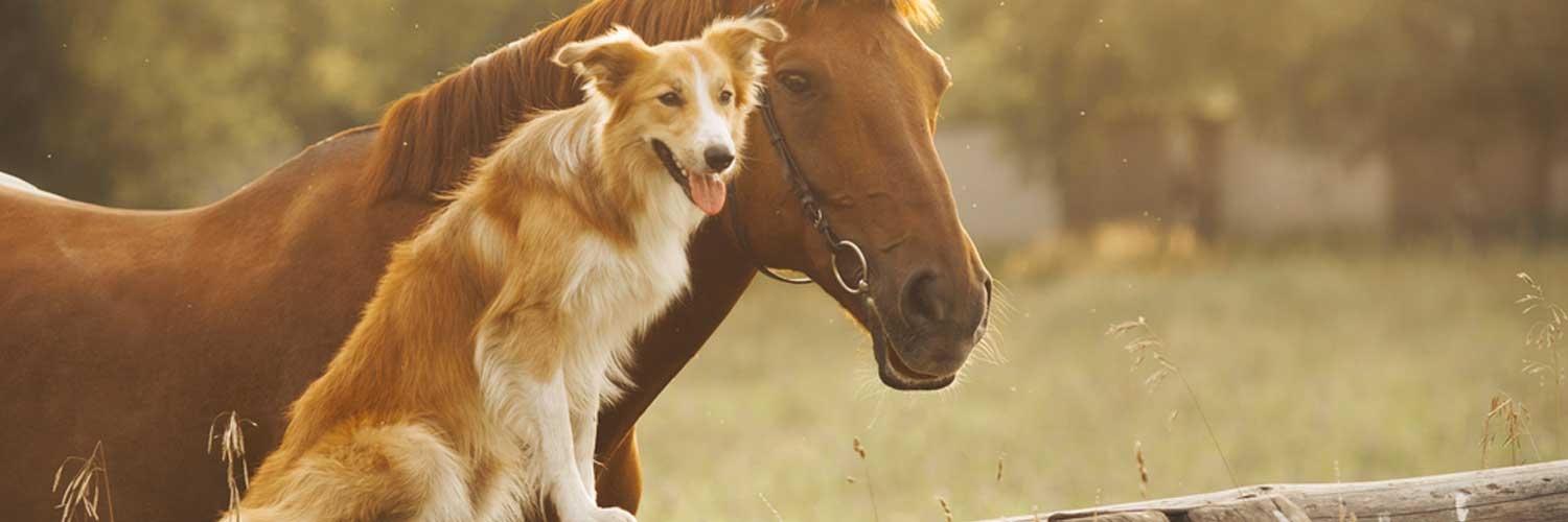 a horse and a dog