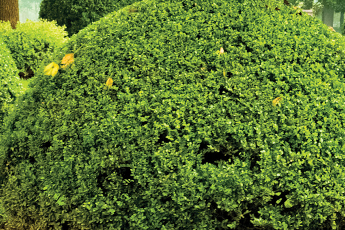 3 Tree and Shrub Diseases To Watch For Heading Into Spring
