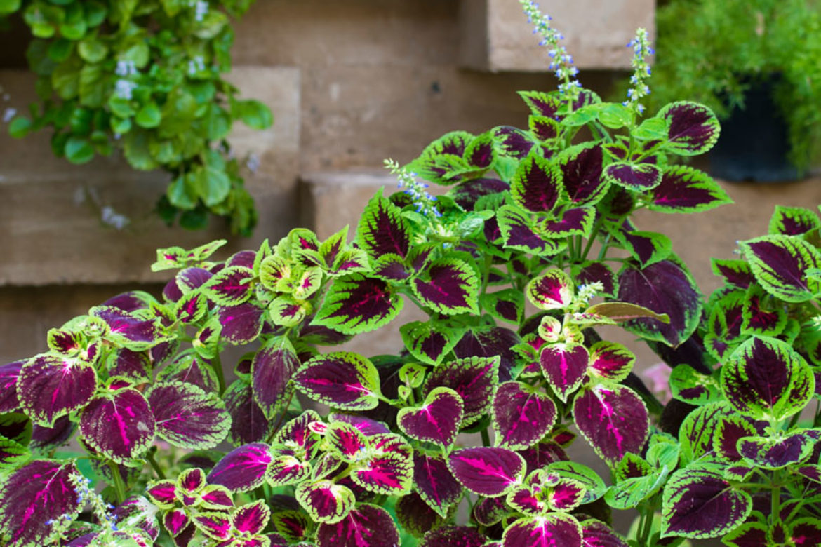 The 5 Best Plants For Your Landscape This Spring