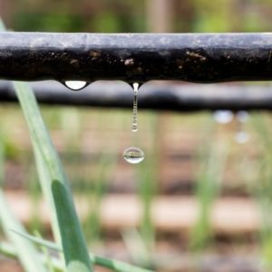 A drip irrigation system is the best way to water your flower bed without watering the weeds here in Louisville, KY.