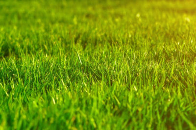 The Essential Lawn Care Guide for 2020: Keep Your Lawn Healthy and Green