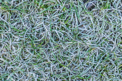 Winter Kill in Indiana: The Cold-Weather Plagues Affecting Your Lawn