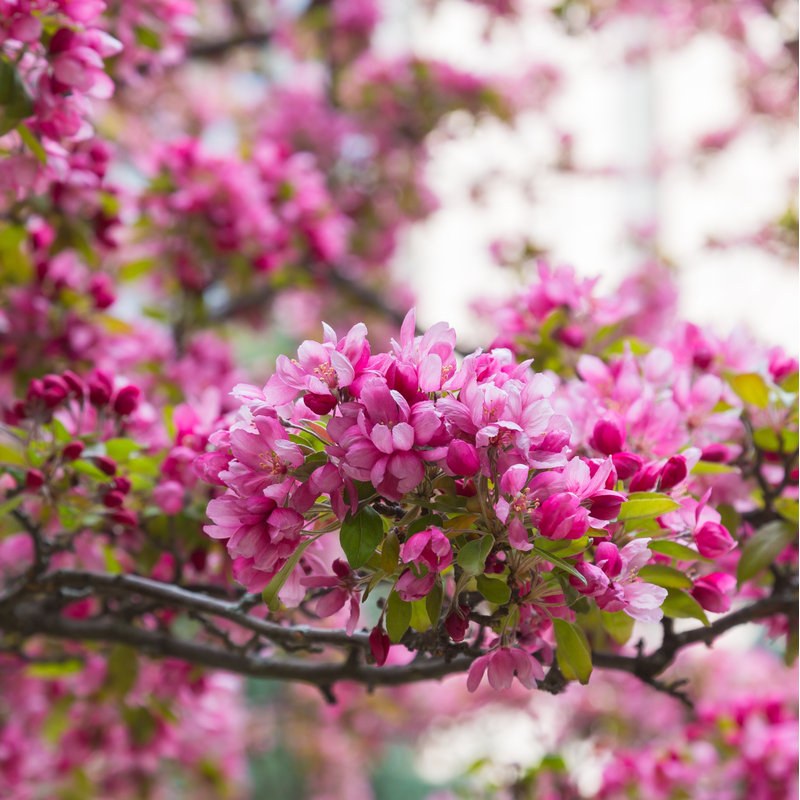 Flowering Trees In Kentucky To Boost Your Home S Curb Appeal