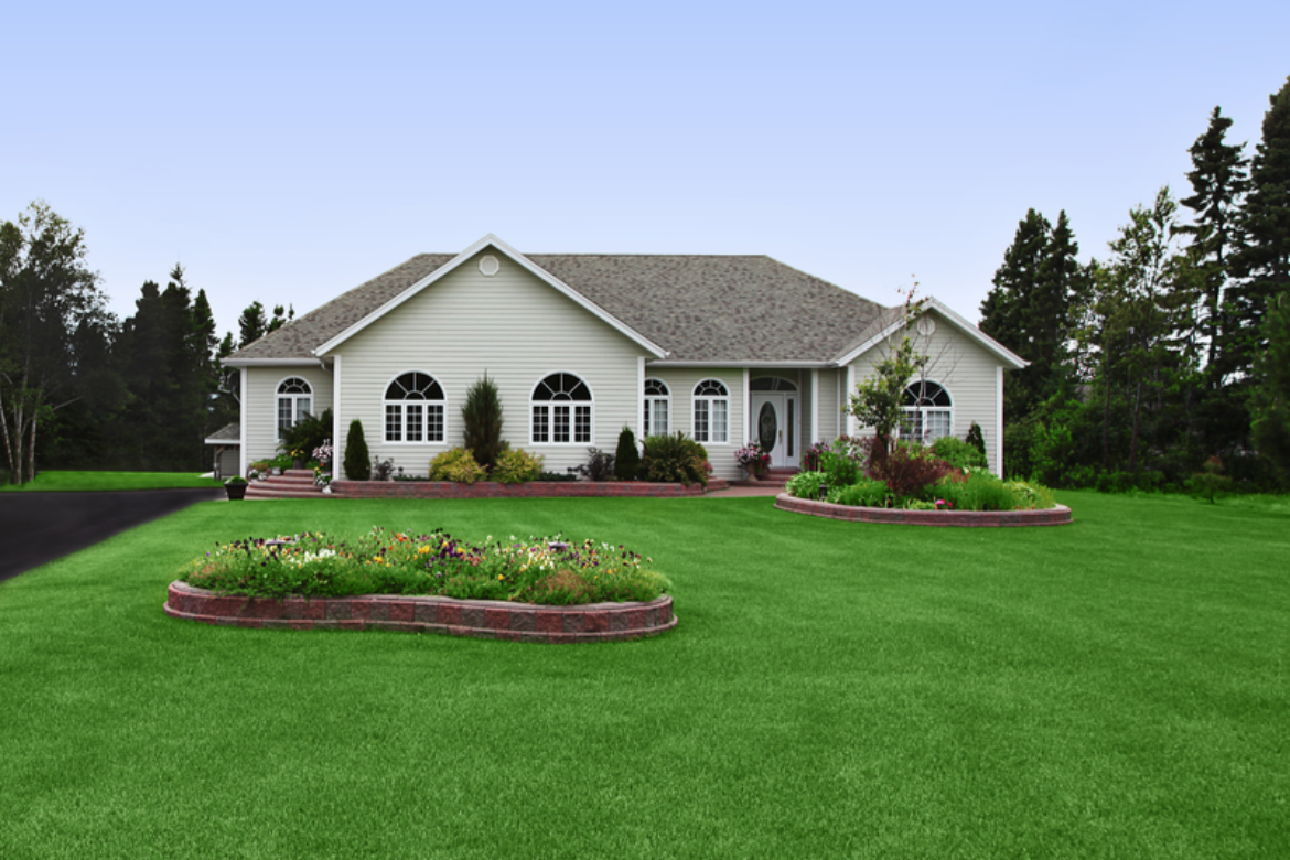 The Best of Basics for Your Lawn Care