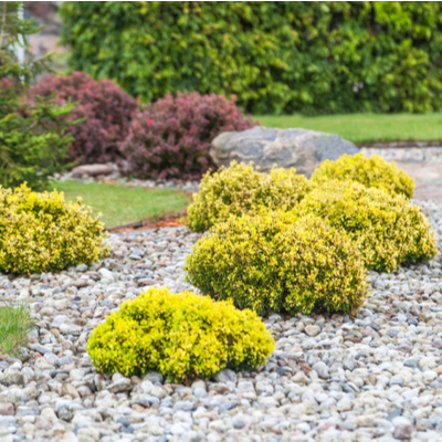 shrubs in landscaping with stones