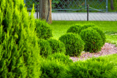 Tree and Shrub Care for Your Cool-Season Weather