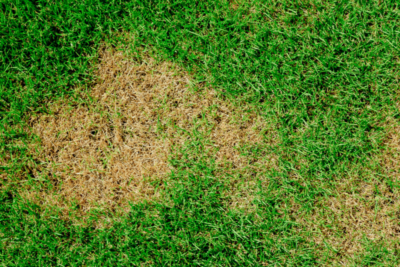 Learn How To Control and Prevent Brown Spot in Kentucky Lawns