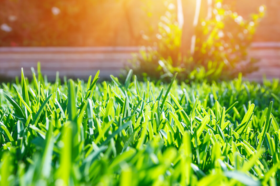 Are Heat & Drought Stress Ruining Your Louisville Lawn?