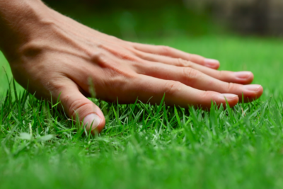Best Lawn Practices for Your Louisville Area Lawn