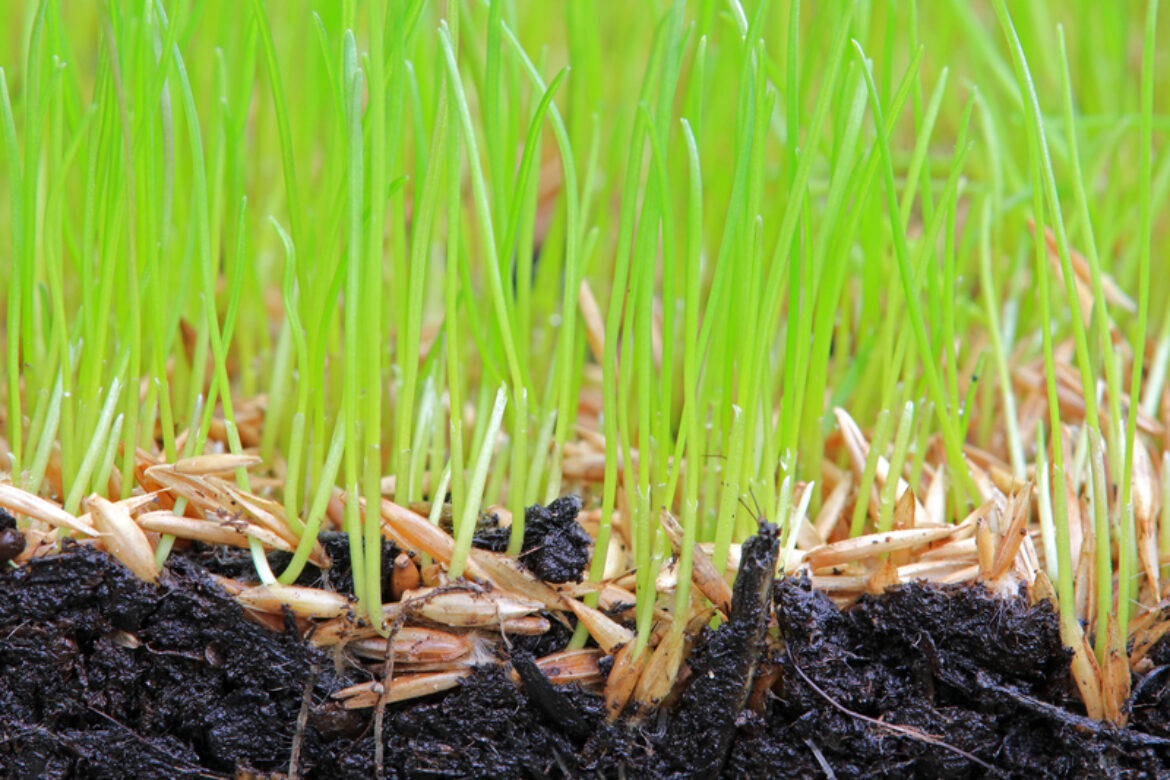 Aeration, Overseeding, Or Power Seeding, Which One is Right For Your Lawn